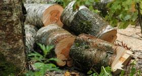 Распил на дрова